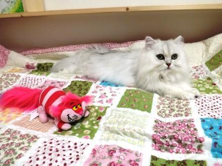 マリーとチェシャ猫