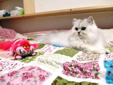 マリーとチェシャ猫 (2)