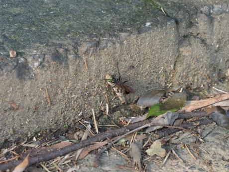 ジガバチ2