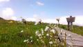 s白木のワタスゲとニッコウキスゲ