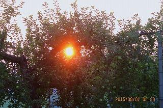 樹間の太陽