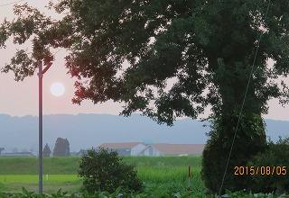 榎の枝と日の入り