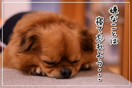 DSC_5490.jpg