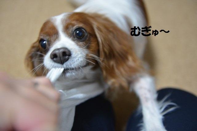 s-2014,12,25 雪ちゃん登場! 010