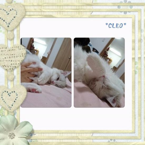 Cクレオ20150705IMG_2221