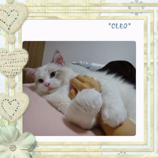 Cクレオ20150705IMG_2222
