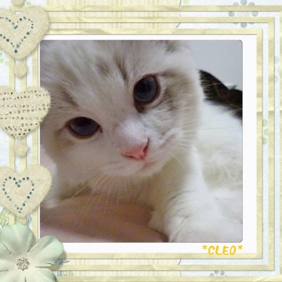 Cクレオ20150711IMG_2313