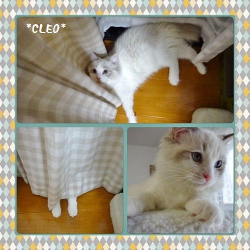 Cクレオ20150724IMG_2475