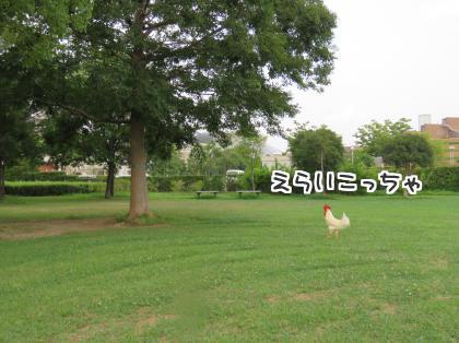 二太2015/07/30-1