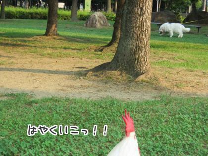 二太2015/08/01-9