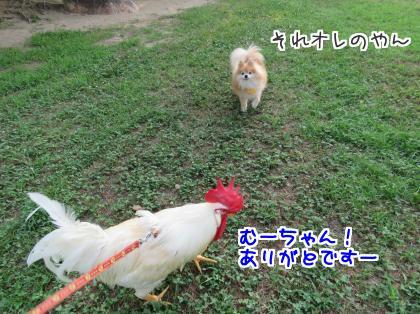 二太2015/08/03-1
