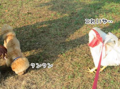 二太2015/08/05-3