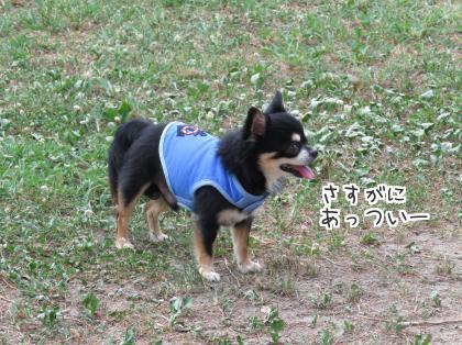 二太2015/08/06-3