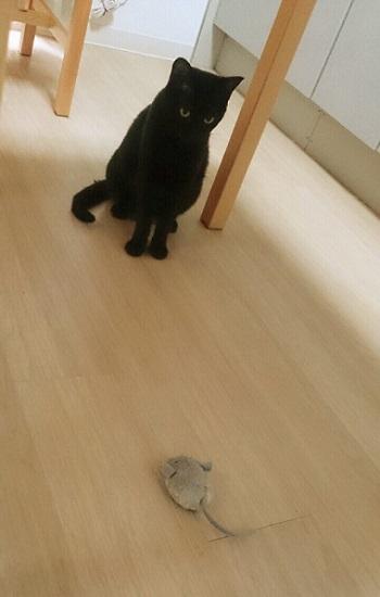 ゴーゴーマウス4