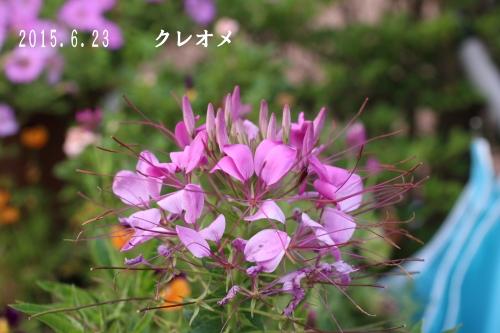 2015 06 23_1333_edited-1