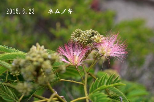 2015 06 23_1335_edited-1