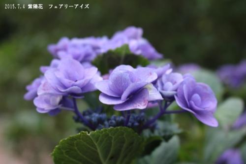 2015 07 04_1787_edited-1