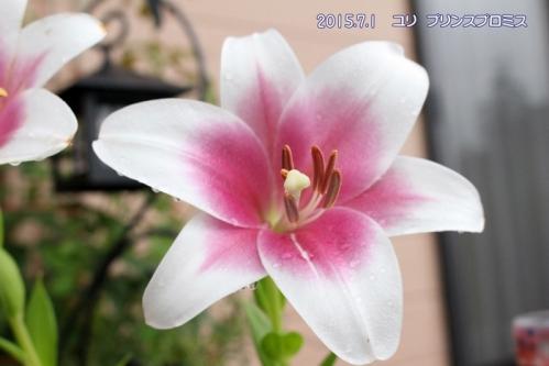 IMG_8995-1.jpg