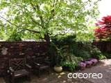 cocoreo1211