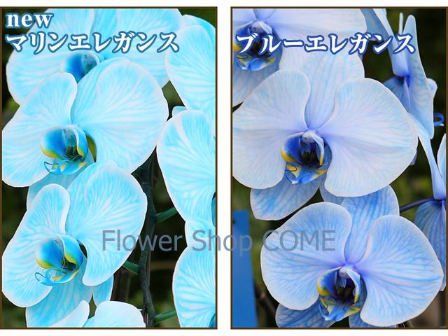 青 水色 花 お祝い