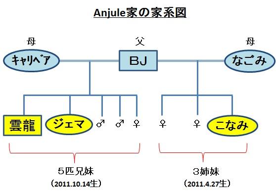 Anjule家の家系図