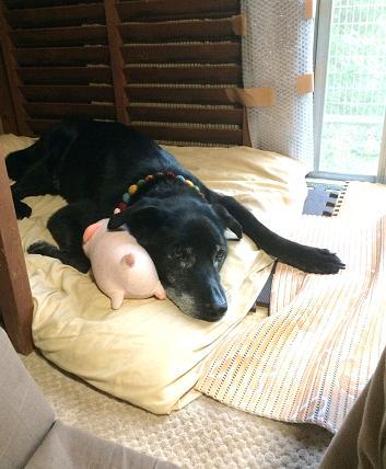 ぶう枕と親分
