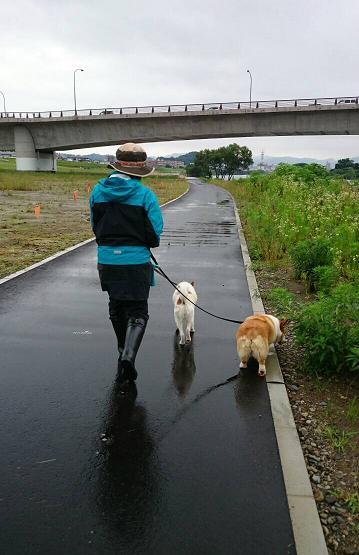 子分のお散歩体験パート2