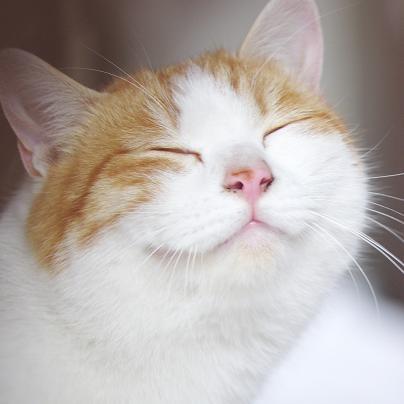 動物 猫笑顔