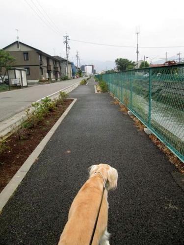 初夏の森歩き12