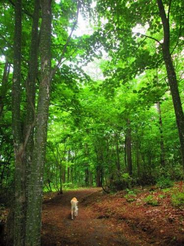 初夏の森歩き6