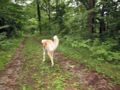 初夏の森歩き7