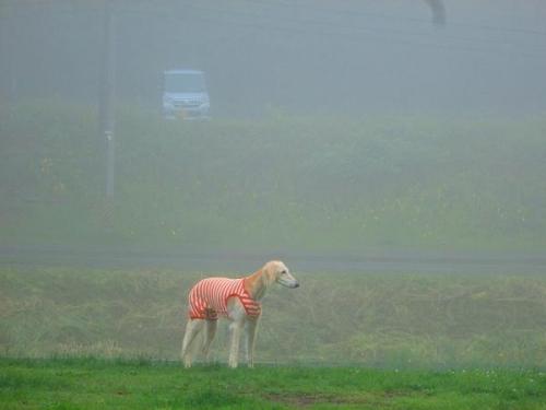 梅雨の空15