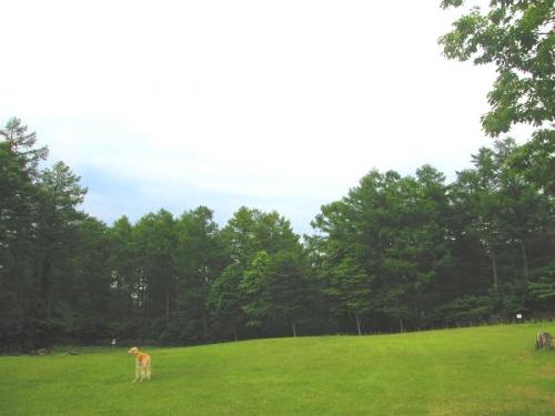 初夏の果樹園16