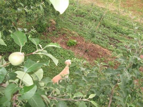 初夏の果樹園1