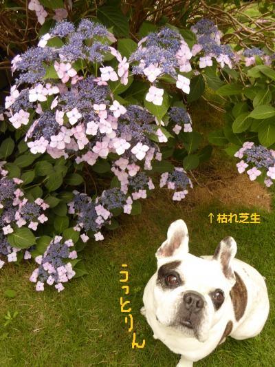 P1390349_convert_20150608132711.jpg