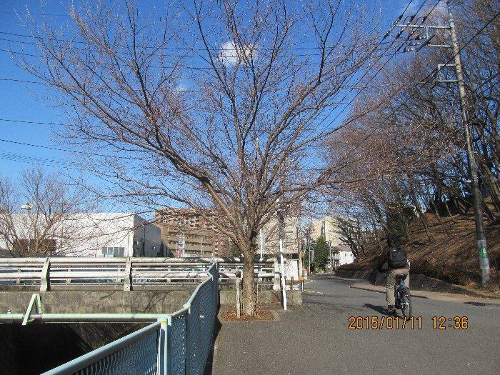 20150111asaokawa10.jpg