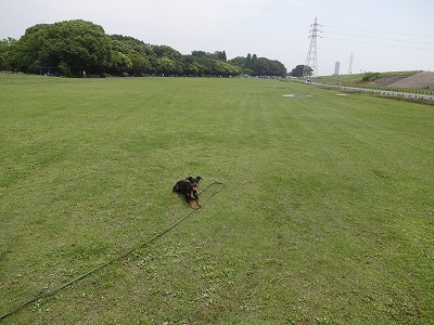 s-ロングマテ (6)