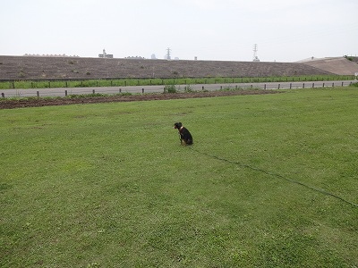 s-ロングマテ (12)