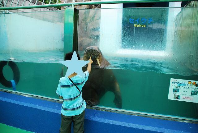 s-動物園 (6)