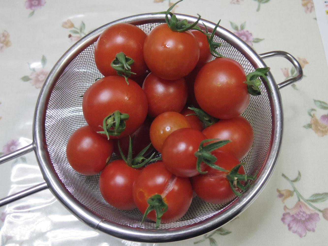 tomato20150706.jpg
