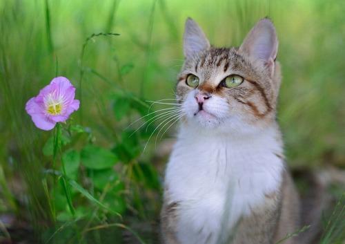 cat08008_2015.jpg