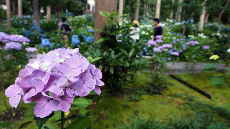 20150628_sanzenin-17.jpg