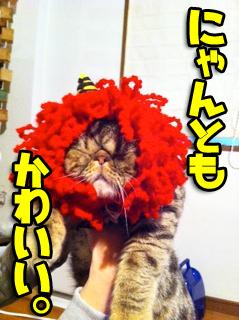 リンゴ猫 犬ヅラ 3