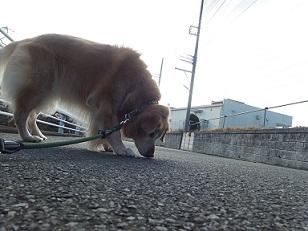 1-9raichi1e.jpg