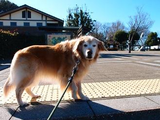 1-3散歩8e