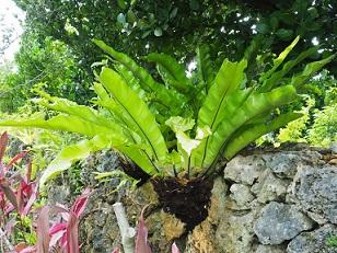 6-15植物f