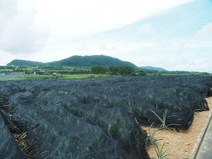 6-18パイン畑1f