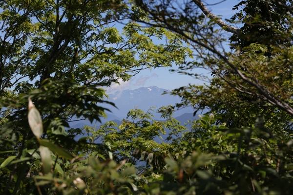 木々の間から白山を拝む。