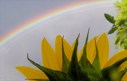 pp_himawari-rainbow