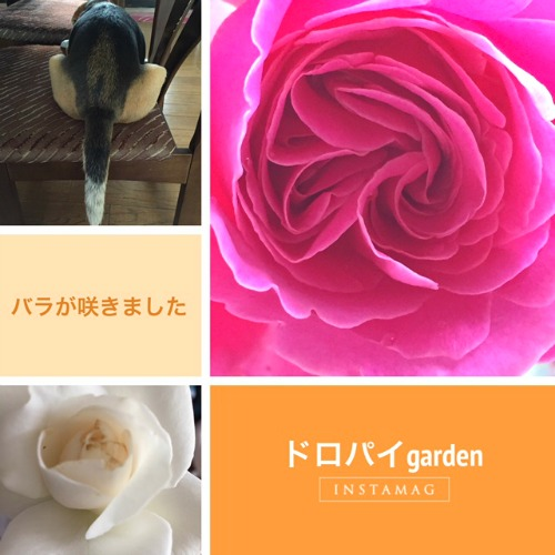 IMG_1757s.jpg